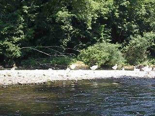 splav po reke....priroda, ptichki, voda