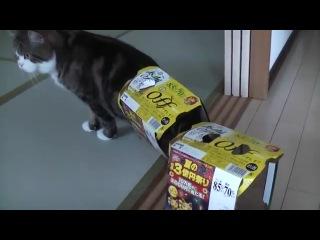 Самый странный в мире кот Мару. Мару и коробки!