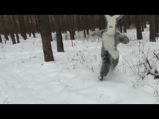 Бродвей Шоу - Снежный человек