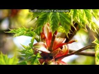 «Весна» під музику Інструментальна музика - Гітара, скрипка, флейта. Picrolla