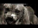 «питбули» под музыку Gapon - Мы уличные псы, мы рождены в боксёрских залах.... Picrolla