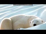«медведи» под музыку Медведица - Ложкой снег мешая...  Ложкой снег мешая,  Ночь идет большая,  Что же ты, глупышка, не спишь?  Спят твои соседи -  Белые медведи,  Спи скорей и ты, малыш.  *****  Мы плывем на льдине,  Как на бригантине  По седым суровым морям.  И всю ночь соседи -  Звездн. Picrolla