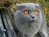 Коте, поющий серенаду с названием