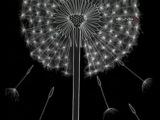 Творчество Светланы Богатырь - в программе Абсолютный слух (ТК Культура)