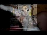 Со стены друга под музыку Детские песни - Смешная песенка про кота. Picrolla