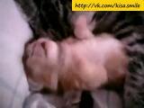 Хорошо, когда есть рядом мама! ==Kisa Smile== Прикольные фото и видео с кошками