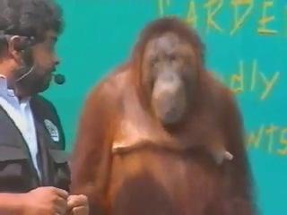 Фокус с обезьяной и апельсином