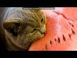 «Картинки» под музыку Детские песенки - Песня про кота. Picrolla