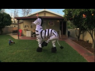 Танцующая зебра (LMFAO - Everyday Im Shuffling)