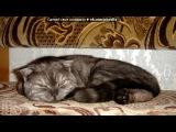 Моя кошка под музыку Детские песни - Смешная песенка про кота. Picrolla