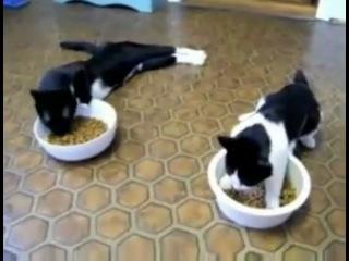 Коты после наркоза(Пуш зе темпо)