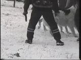 Собачьи бои чемпион Калмыкии(кв/дог) Барбос против сао Екемена