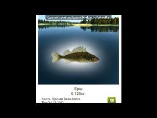 «Трофейная рыбалка» под музыку Елвин и бурундуки - Сырные шарики mix.mp3. Picrolla