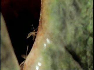 BBC: Прогулки с динозаврами (озв. Н. Дроздов) 5-я серия