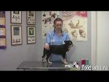 Как правильно делать уколы кошкам и собакам