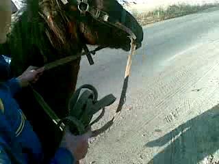 Хлопці п'яні, коні запражоні