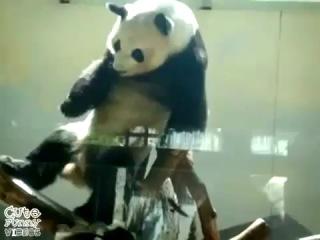 панда тах трах » Freewka.com - Смотреть онлайн в хорощем качестве