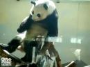 панда тах трах