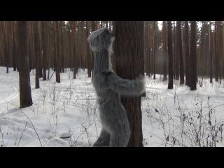 Нечто большее чем снежный человек ( Сейчас к не му не надо подходить, так как в момент спаривания он очень опасен.)