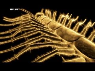 Войны жуков-гигантов. 4 серия (Discovery, 2011)