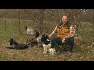 Планета собак: Русский Охотничий Спаниель