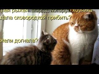 «Со стены Смешные картинки с котами и кошками  ツ» под музыку Психоделика (смех) - Улыбаемся,ребятки,не киснем :D. Picrolla