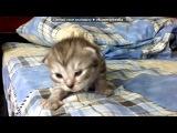 «мои животные и не только и Тигр отец и муж» под музыку Песня про котенка - Ты мой милинький хорошенький котенок.... Picrolla