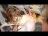 МОЯ собачка Алиска под музыку DABAKS- - Кукушка (В.Цой, гр.КИНО) piano 2008. Picrolla