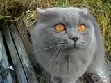 Кот произносит - «Гад»