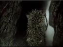 Ёжик в тумане (Союзмультфильм, 1975 год) на русском с итальянскими субтитрами