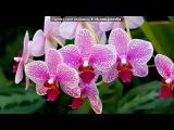 «цветы» под музыку Шопен/Поль Де Сенневиль - Осенний вальс/Marriage D'amour . Picrolla