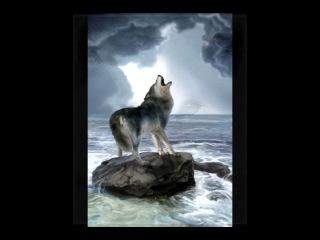 Би 2 Волки уходят в небеса