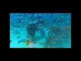 Armin Van Buuren and DJ Shah feat Chiris Jones - Going Wrong (Alex M.O.R.P.H. b2b Woody van Eyden Remix)