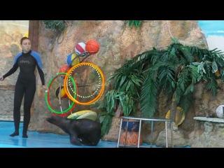 Дельфинарий Немо-- Умка и Пеппи