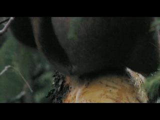 Документальный фильм Россия царство тигров медведей и вулканов Russland Im Reich der Tiger Bären und Vulkane Германия 2011