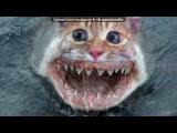 «С моей стены» под музыку ОЧЕНЬ смешная песня - Про кота. Picrolla