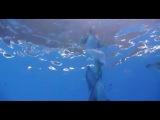 Танец с дельфинами под водой. Очень красиво.
