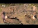 «В дебрях Африки: Нил. Африканская одиссея» (Документальный, 2011)