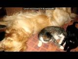 «Коты с другими животными)» под музыку Лана  - Измена.Ты сидишь одна, дома пустота.(версия1). Picrolla