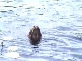 2 июля 2011. Празднование моего Д/Р. Развлечения в воде.