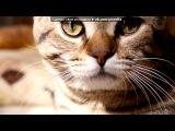«леопардовое счастье» под музыку Кошка-это слово заменило её имя, Кошку любят сильные мужчины, Кошка всегда вправе выбирать, Кошке на законы наплевать - Кошка не ищет друзей,особое мнение.Красивая и опасная..Глазами бедрами, как магнитом.Мужчина никогда не чувствует себя сытым..Ты пошел за ней по улицам,не зная,Кто она такая..Привлекла, конечно, внешность и походка,Та, что только у нее,Боже,как она идет... Picrolla