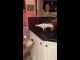 Попугай кормит собаку.. WTF ???