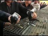 Выставка Узбекских голубей 2007 год Ташкент (8)