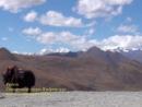 Священное озеро Ямдрок цхо в Тибете