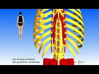 Краткий обзор тела человека 3Dверсия