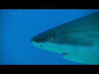BBC: Тайны Тихого океана. 4. Океан вулканов
