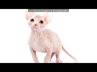Породы кошек под музыку Fabri Fibra Feat Gianna Nannini In Italia ft Gianna Nannini Picrolla