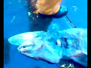 В Черном Море поймана акула мутант!