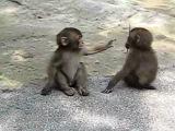 Baby Monkeys хахаха ржу немогу
