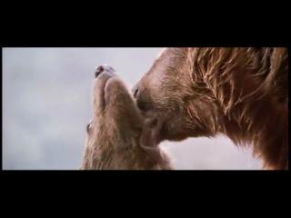 Про медведика и злобную пантеру.
